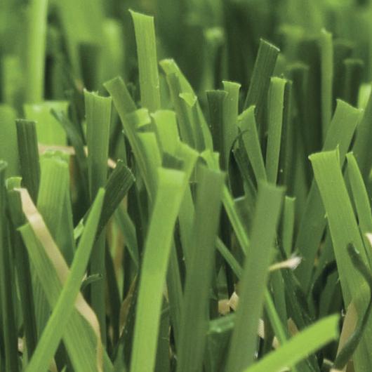 Green Plus - Green Plus